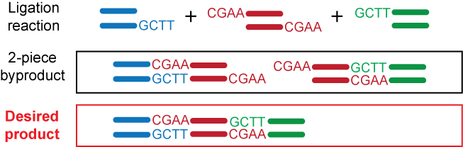 The Example Below Shows A 3 Piece Linear Ligation Reaction With Two Custom Design Sticky Ends Generated By Type IIS Restriction Enzyme